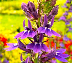 Norwell Nurseries For Choice And Unusual Plants Grown And Sold In